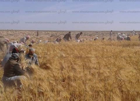 محافظ مطروح: وزير الزراعة يوفر 100 طن تقاوي قمح وشعير بنصف الثمن