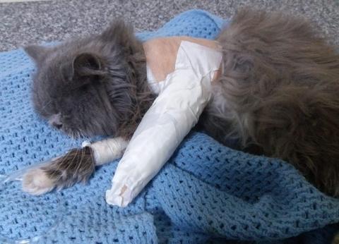 """الحماية المدنية تنقذ """"قطة"""" سقطت في """"منور"""" عقار  بقليوب"""