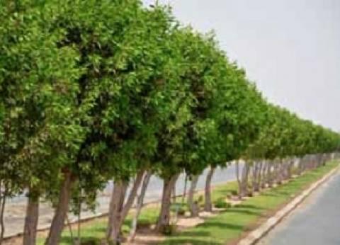 زراعة 2000 شجرة وتجميل مداخل مدينة الخارجة بقافلة الخدمة العامة