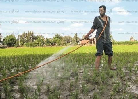 """رئيس """"شعبة الأرز"""" يتوقع ارتفاع الأسعار إلى 15 جنيها للكيلوجرام"""
