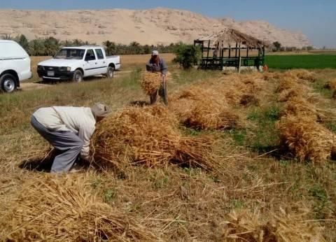 نقيب الفلاحين يحمل وزارتي التموين والزراعة سبب تأخير إعلان أسعار القمح
