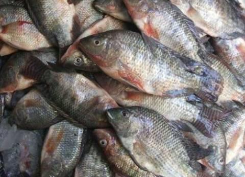 """ضبط أسماك """"محظور تداولها"""" في حملة تموينية بالبحيرة"""