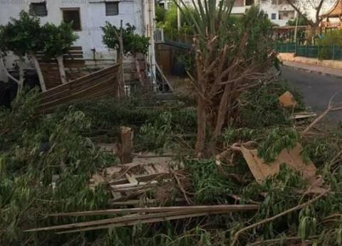 """الوحدة المحلية بـ""""دهب"""" عن """"مجزرة الأشجار"""": خطر على البنية التحتية"""