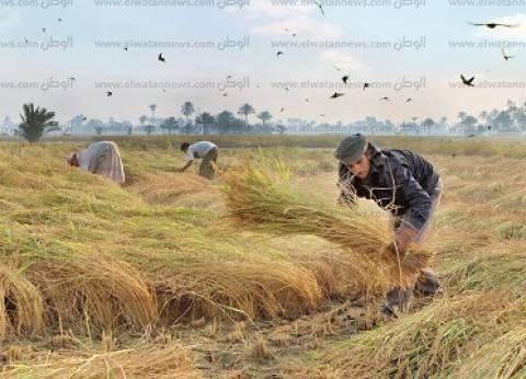 المزارعون المخالفون لقرار «الحظر»: «عايزين نأكل عيالنا».. ومحاضر «الرى» وهمية وظالمة