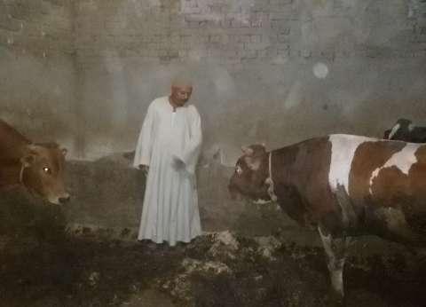 إقبال محدود على «اللحوم» فى بنى سويف.. وزيادة الأسعار تخطت 200٪