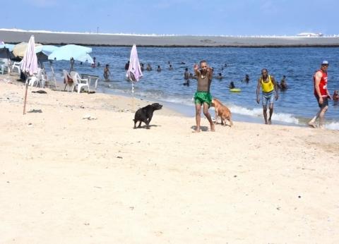 """""""سياحة الإسكندرية"""" تفرض غرامة على شاطئ رأس التين بسبب الكلاب"""