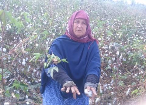 """""""الزراعة"""": نسعى للنهوض بالقطن المصري ودعم الفلاحين"""