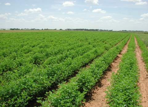 ندوة حول الاستفادة القصوى من المخلفات الزراعية بالقليوبية