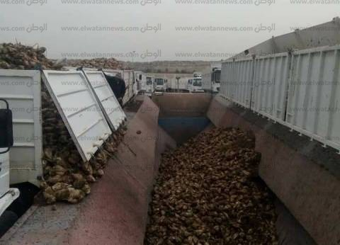 """""""زراعة كفر الشيخ"""" تعلن حصاد 60 ألف فدان من محصول البنجر"""
