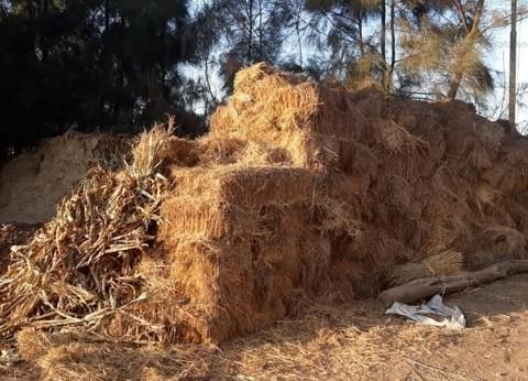 تدوير وكبس وفرم أكثر من 205 آلاف طن قش أرز في كفر الشيخ
