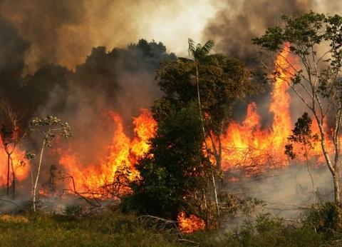 غابات الأمازون.. الأمم المتحدة تدعو للتحرك للسيطرة على الحرائق