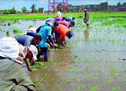 نواب يطالبون الحكومة بمحاصيل بديلة.. ومواجهة مافيا «مياه النيل» وتقديم دراسة دقيقة عن استهلاك المياه