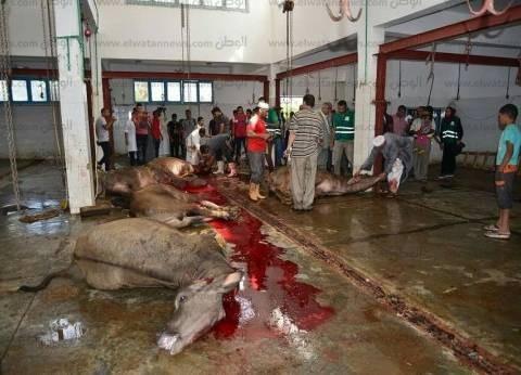 بالصور| «أبوزيد» يتفقد مجزر مرسى مطروح.. و«مصر الخير» تذبح 37 عجلا