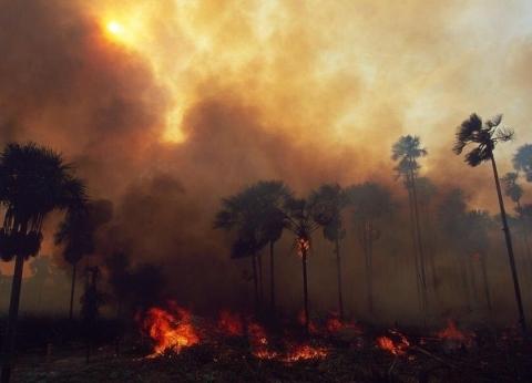 """غابات الأمازون.. أرقام وحقائق عن احتراق """"رئة العالم"""""""