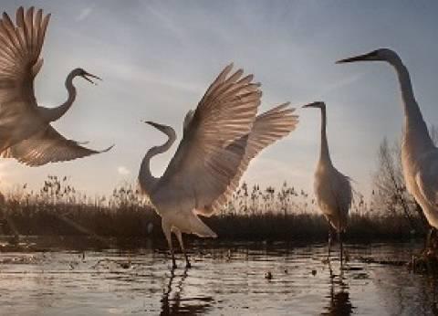 «البيئة»: 20 ألف نوع «كائنات حية» فى أرضنا ومعدلات الانقراض تضاعفت 1000 مرة
