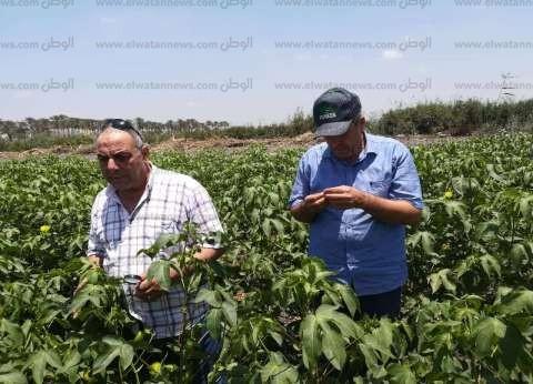 """""""الفلاحين"""" تطالب """"الزراعة"""" بالتراجع عن قرار تحديد سعر قنطار القطن"""