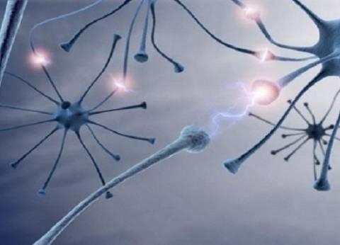 دراسة: الجوع يساعد على إعادة ترتيب عمل الدماغ