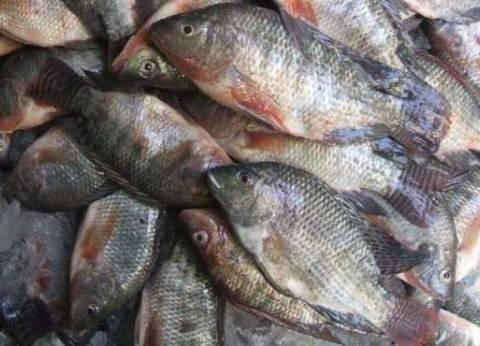 """""""الثروة السمكية"""" توافق على إنشاء أقفاص سمكية لأول مرة  في مطروح"""