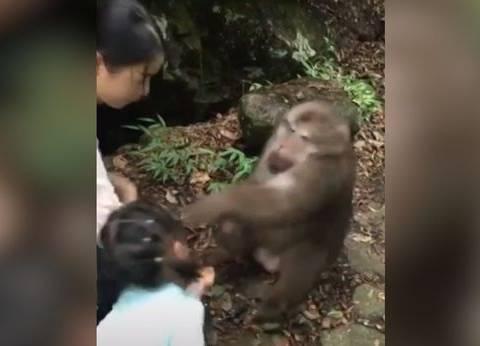 """حبس صاحبة فيديو """"إثارة القرد"""" بالمنصورة بتهمة """"التحريض على الفسق"""""""