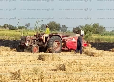 شكاوى من استغلال المزارعين إجازة العيد في حرق قش الأرز بالدقهلية