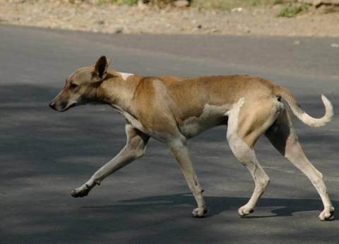 حملة للقضاء على الكلاب الضالة في قايتباي بمنشأة ناصر