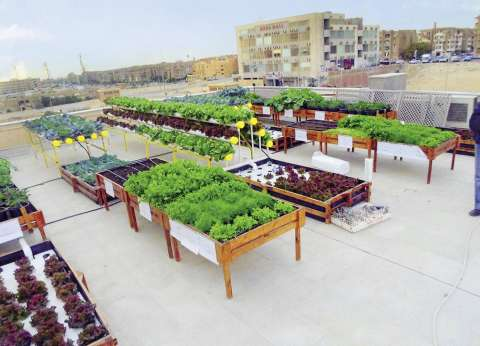 دعوة لزراعة أسطح المبانى لمواجهة غلاء «الخضار والفاكهة»