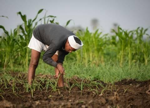 نقص الأسمدة يهدد بتلف المحاصيل الصيفية فى الصعيد