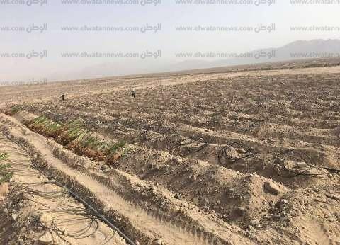 """""""الزراعة"""": 29 مليون جنيه حصيلة بيع 39 قطعة لأبناء سيناء بالمزاد"""