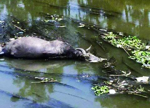 النيل: الحبس سنة وغرامة تصل لـ«50 ألفاً» عقوبة «إعاقة سير المياه»