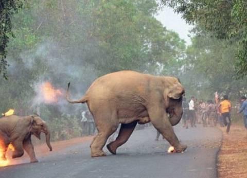 """صورة لأنثى فيل وصغيرها يهربان من هجوم ناري تفوز بجائزة """"الحياة البرية"""""""