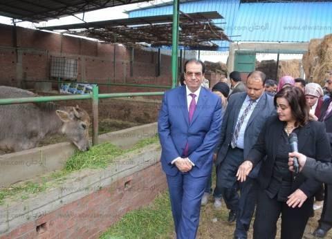 """محافظ الدقهلية: تحصين 133 ألف رأس ماشية ضد """"الجلد العقدي"""" و""""الدرن"""""""