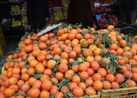 استقرار أسعار الفاكهة في سوق العبور.. واليوسفي بـ5.5 جنيه للكيلوجرام