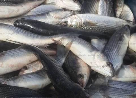قبل أعياد الميلاد.. تعرف على أسعار بيع اللحوم والدواجن والأسماك