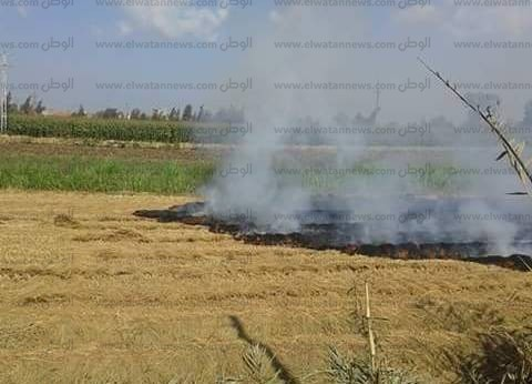 تحرير 1400 محضر لمزارعين بكفر الشيخ لحرقهم قش الأرز