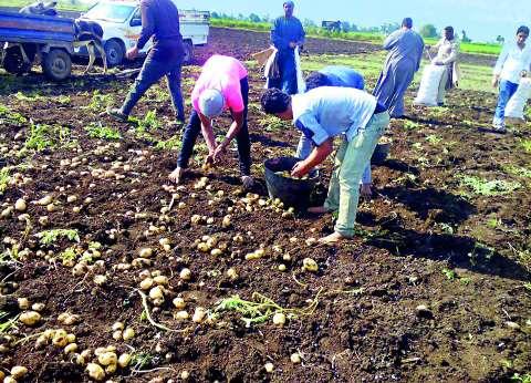 تقرير: 44 مليون طن ثروة مصر من «المخلفات الزراعية» سنوياً.. نصفها مهدر