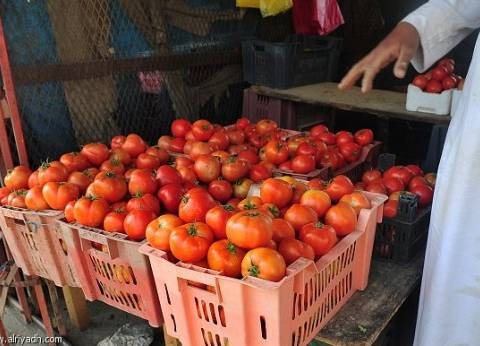 """الألف شتلة بـ800 جنيه.. """"الفلاحين"""" تحذر من ارتفاع أسعار تقاوي الطماطم"""