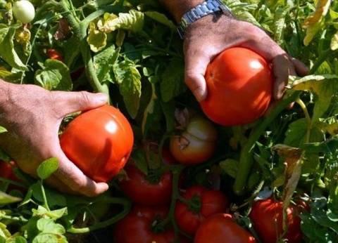 الخضروات تتراجع في سوق العبور.. وكيلو الطماطم بـ4.5 جنيه