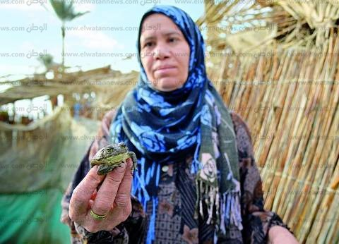 """""""الزراعة"""" و""""البيئة"""" يصدران قرارا بوقف صيد الضفادع لمدة 3 أشهر"""