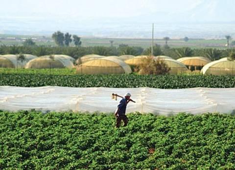نقيب الفلاحين ينتقد غياب المرشد الزراعي: 60% من المهندسين عاطلين