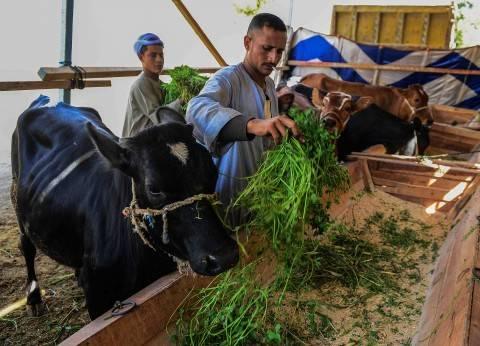 وزارة التعاون الدولي تقيم مزرعة إنتاج حيواني بالوادي الجديد