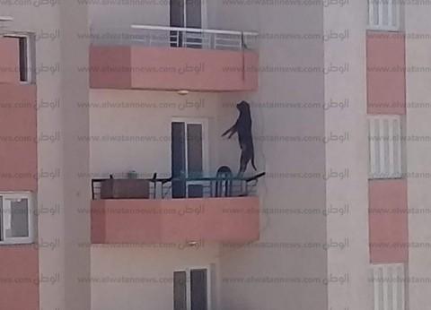 نشطاء يتداولون صورة كلب مشنوق في الغردقة