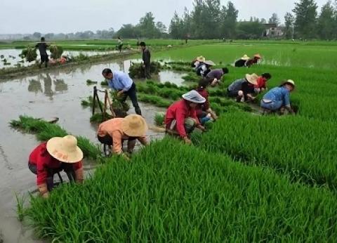 الصين وفيتنام وروسيا والاتحاد الأوروبى.. المتنافسون على «كعكة التوريد»