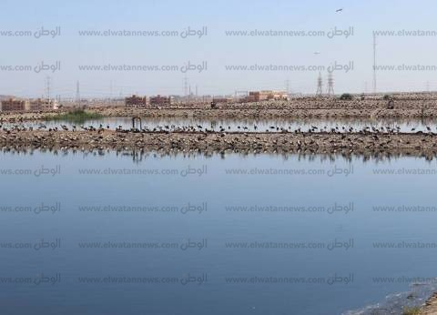 """ضبط 75 زجاجة خمور """"بدون ترخيص"""" في حملة على الملاهي الليلية بشرم الشيخ"""