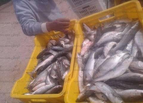 طرح 600 كيلو أسماك بأسعار مخفضة لأهالي الغردقة