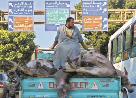 مفاجأة.. مصر أصدرت أول قانون فى العالم لتجريم تعذيب الحيوانات عام 1902