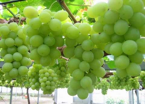 """""""الزراعة"""" عن ارتفاع أسعار الفاكهة: """"التاجر بياخد العنب بـ5 يبيعه بـ20"""""""