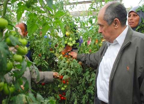 """وزير الزراعة يتفقد محطة بحوث الخضر بقها: """"بداية لإنتاج هجن مصري"""""""