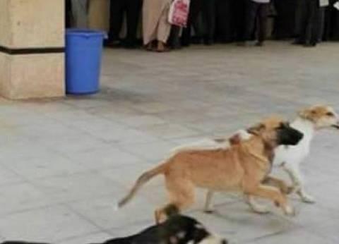 """""""تموين المنيا"""" تنفي ضبط لحوم كلاب بملوي.. وتناشد الأهالي: تحروا الدقة"""