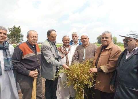 بدء موسم حصاد محصول الكتان في الغربية