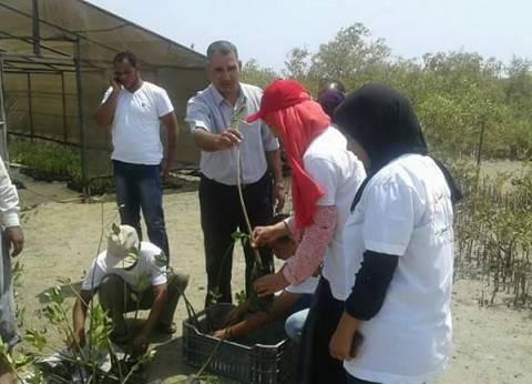 """ورشة عمل لشباب الجامعات والمدارس لزراعة أشجار """"المانجروف"""" بسفاجا"""